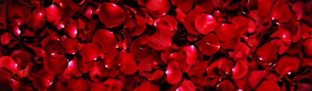 red-rose-flower-petals-background-header.jpg